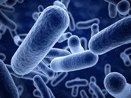 """Jornada Técnica sobre""""Listeria monocytogenes"""""""